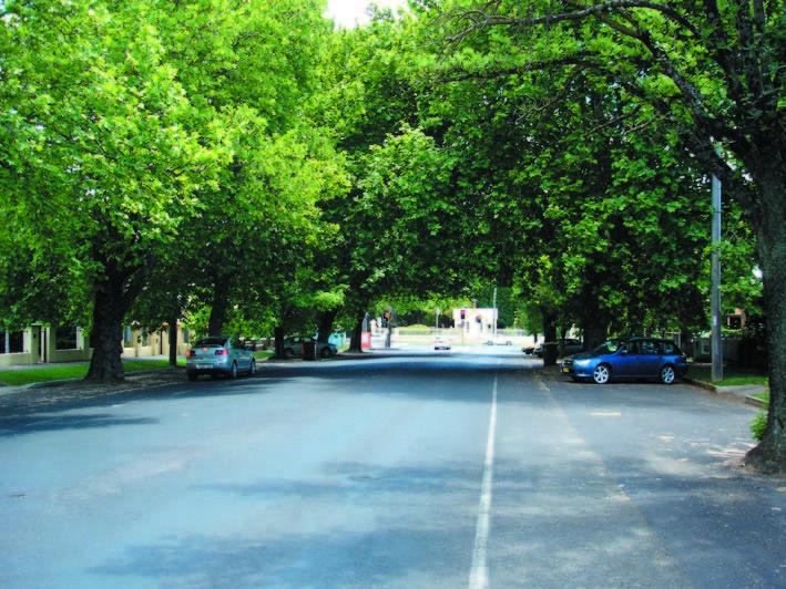 Avenue Plantings_byng st