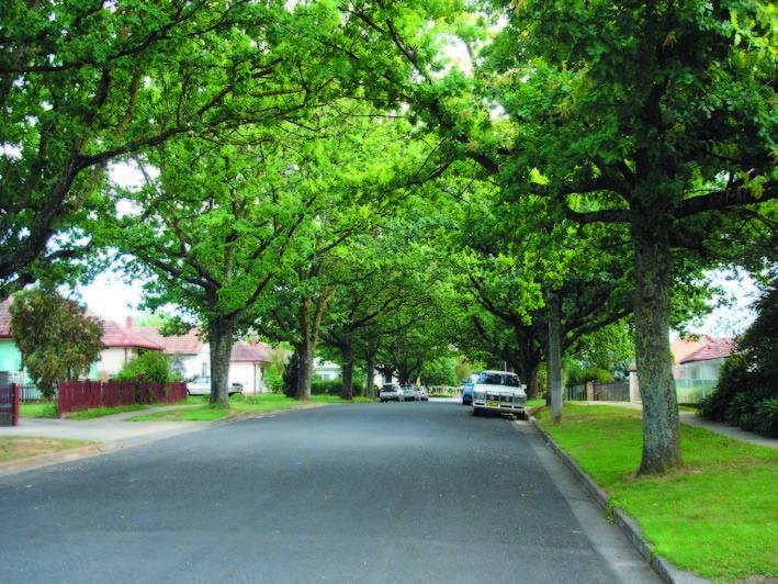 Avenue Plantings_Fox ave