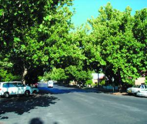 Avenue Plantings_kite