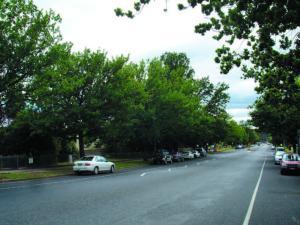 Avenue Plantings_matthews avet