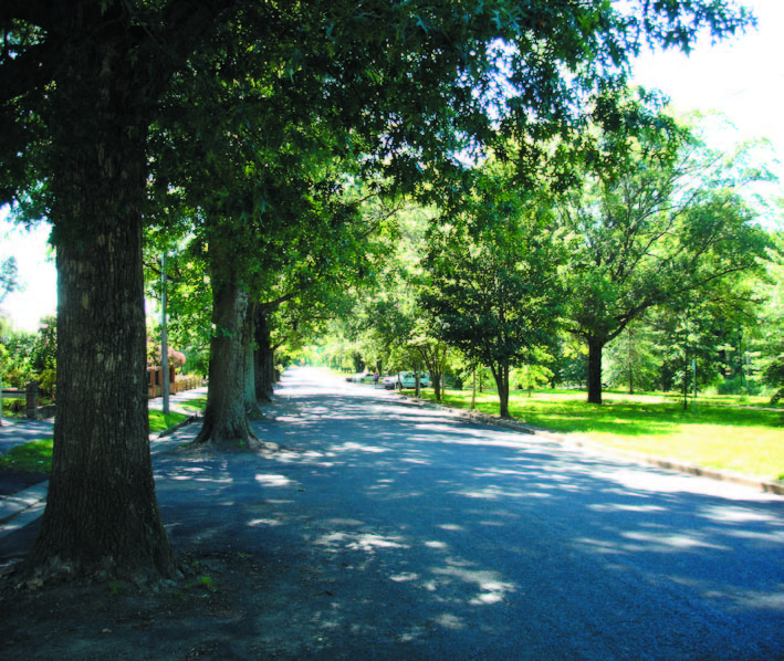 Avenue Plantings_national ave