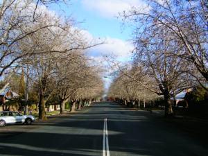 Avenue Plantings_sampson