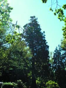 Big Tree cook park