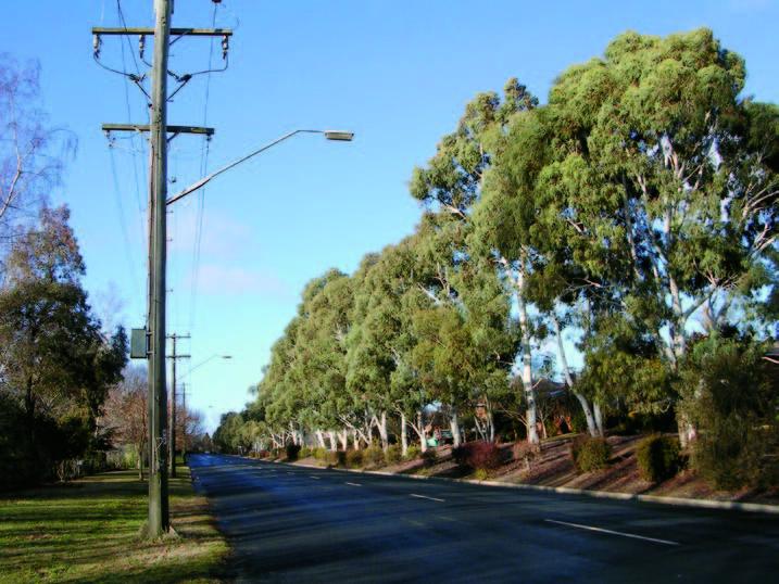 Ecalyp Avenue