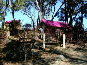 Heritage Rose_botanic garden
