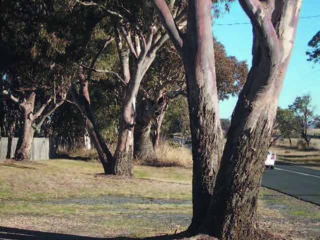March vegetation