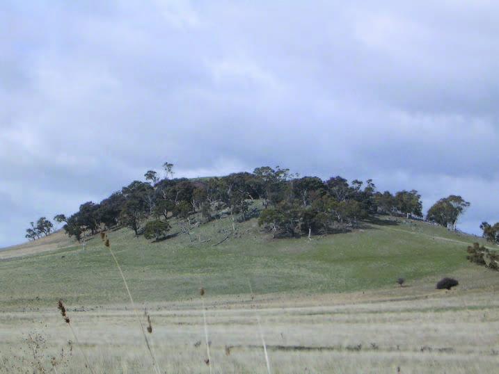 March vegetation2