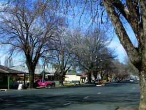 The streetscape of McLachlan Street is characterised by mature Plane trees (Platanus sp.) and wide roads