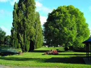 Memory Park trees
