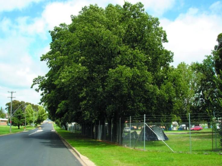 Oak trees Caravan Park