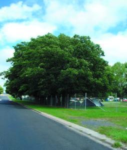 Oak trees Caravan Park2