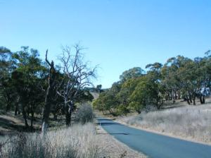 Native roadside vegetation with meandering country road