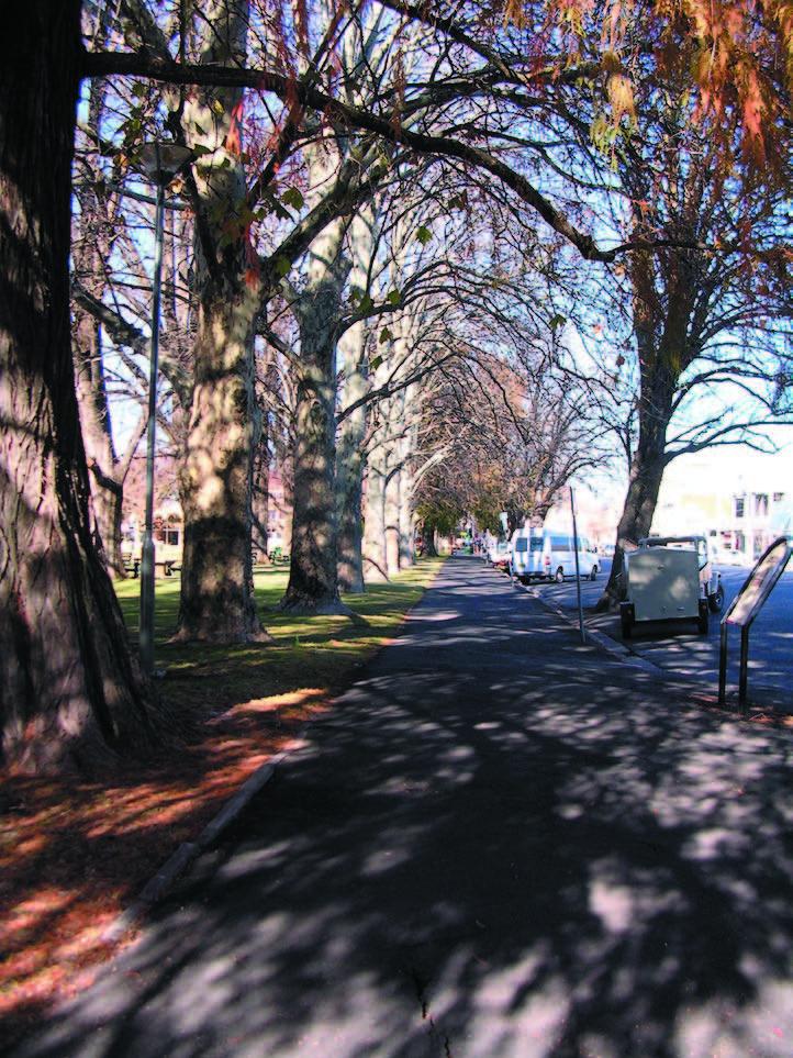 Robertson Park_avenue
