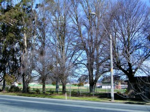 Large mature trees line the edge of Wade Park